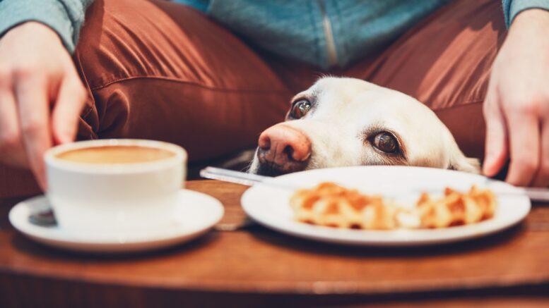 Hundar kan spåra cancer